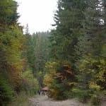 Po ekoputekata Vlastelinut na planinata 8